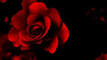 write ur name on red rose